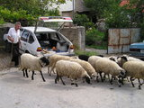 Local Man, Car and Sheeps